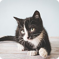 Adopt A Pet :: Reginald - Hendersonville, NC