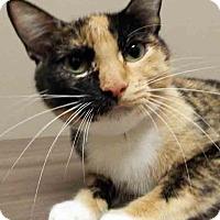Adopt A Pet :: ADOPTED!!!   Jada - Channahon, IL