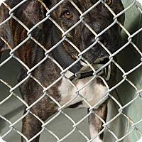 Adopt A Pet :: MAY MAY - Brooksville, FL