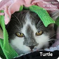 Adopt A Pet :: Turtle - Temecula, CA