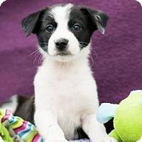 Adopt A Pet :: Dixie - Santa Fe, TX