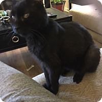 Adopt A Pet :: Michonne - Overland Park, KS