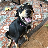Adopt A Pet :: Rue (FORT COLLINS) - Fort Collins, CO