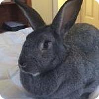 Adopt A Pet :: Helen - Woburn, MA