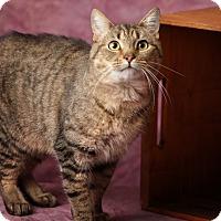 Adopt A Pet :: Catpurrnicus - Harrisonburg, VA