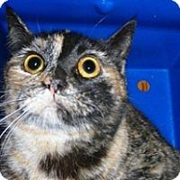 Adopt A Pet :: 329092 - Wildomar, CA