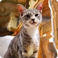 Adopt A Pet :: EvaLynn - Trevose, PA
