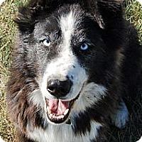 Adopt A Pet :: Rosie - Glenrock, WY