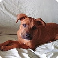 Adopt A Pet :: Penny - Spring City, TN