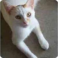Adopt A Pet :: Grange - Milwaukee, WI