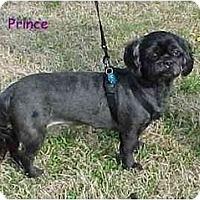 Adopt A Pet :: Prince - Dayton, OH