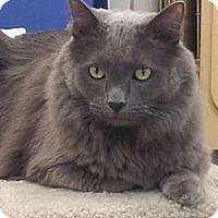 Adopt A Pet :: Kombat - Chandler, AZ