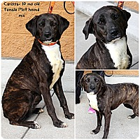 Adopt A Pet :: Carrissa - Evansville, IN