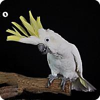 Adopt A Pet :: Rio - Punta Gorda, FL
