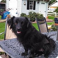 Adopt A Pet :: Murphy - Warrenton, NC