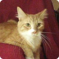 Adopt A Pet :: Blase - Delmont, PA