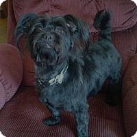 Adopt A Pet :: Sophie-adoption pending - Mississauga, ON
