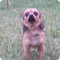 Adopt A Pet :: chino - Ortonville, MI