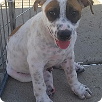 Adopt A Pet :: The States Litter - Colorado - Bellflower, CA