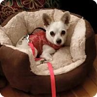 Adopt A Pet :: Sasha - San Francisco, CA