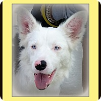 Adopt A Pet :: Vivian - DEAF - Pending Adopt - Post Falls, ID