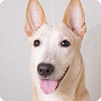 Adopt A Pet :: Jazzy - Sudbury, MA
