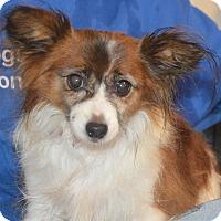 Adopt A Pet :: Kate - Prole, IA