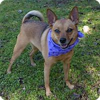 Adopt A Pet :: Roxy - Mocksville, NC