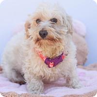 Adopt A Pet :: Summer - Loomis, CA