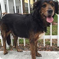 Adopt A Pet :: Argo - Ocean Ridge, FL