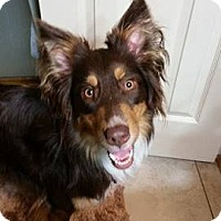 Adopt A Pet :: Olive - Allen, TX