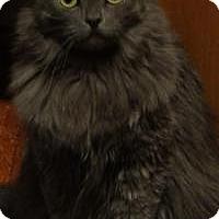 Adopt A Pet :: Grayson - Worcester, MA