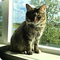 Adopt A Pet :: Emily - Blaine, MN