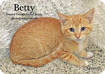 Domestic Shorthair Kitten for adoption in Ortonville, Michigan - Betty