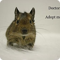 Adopt A Pet :: Doctor - West Des Moines, IA