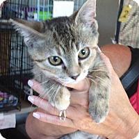 Adopt A Pet :: Mosey - Breinigsville, PA