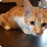 Adopt A Pet :: Alex - Marietta, GA