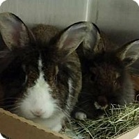 Adopt A Pet :: Hannah - Woburn, MA