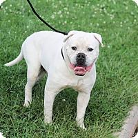 Adopt A Pet :: Rocky - Manahawkin, NJ