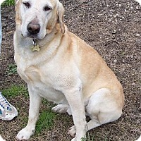 Adopt A Pet :: Bosco - Lafayette, LA