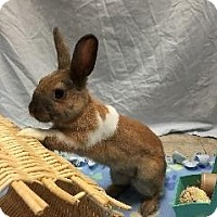 Adopt A Pet :: Butternut - Woburn, MA