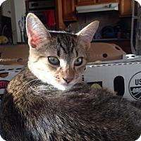 Adopt A Pet :: Omar - Sherman Oaks, CA