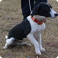 Adopt A Pet :: Travis - Jackson, GA
