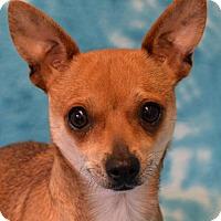 Adopt A Pet :: Sky - Eureka, CA