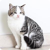 Adopt A Pet :: Waldo C170010: PENDING ADOPTION - Edina, MN