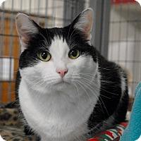 Adopt A Pet :: Dixie - Winchendon, MA