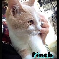 Adopt A Pet :: Finch - Hartford City, IN