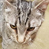 Adopt A Pet :: Maddox - Smithfield, NC