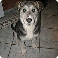 Adopt A Pet :: Claira - Egremont, AB