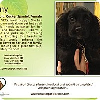 Adopt A Pet :: Ebony - Ottawa, ON